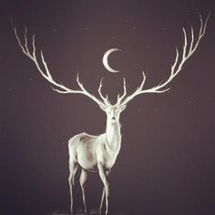 In search of the White stag