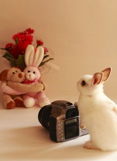 Future Photographer (^0^) by Spice ♥ Darling, via Flickr