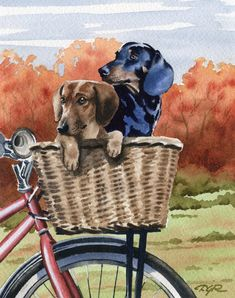 Unique Dachshund fine art from the studio of artist David J Rogers. Gallery quality fine art at studio direct prices! The perfect gift for the Dachshund lover! Biking With Dog, Mini Dachshund, Daschund, Dog Paintings, Scottish Terrier, Dog Art, Cute Dogs, Cute Animals, Art Prints