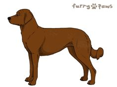 Furry Paws // WCP HEX's Veive |4E 24HH 4str lala| *BoB x14*'s Kennel