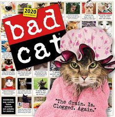365 Days of Bad Cats Calendars 365 Day Calendar, Creative Calendar, Cat Calendar, Calendar 2020, Cat Biting, Bad Cats, Free Pdf Books, Cat Wall, Mystery Books
