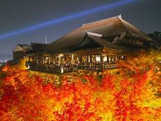 KYOTO JAPAN 京都•清水寺など紅葉ライトアップの名所 Autumn leaves in Kyoto Light Up 永観堂、高台寺、...