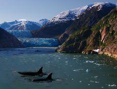 Killer whales in #Alaska