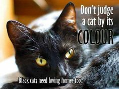 I had 4 black cats since I was a kid and they all been great.