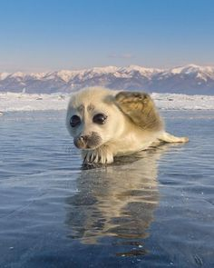 Seal Pup Poses For Man Who Travelled 1,000s Of Miles To Take His Photo. - http://www.lifebuzz.com/baby-seal/