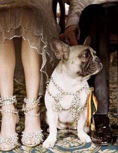 Frenchies are the perfect sidekick, you can take them anywhere