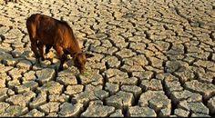 En 2030, los humanos necesitaremos casi un 40% más de alimentos y agua : Noticias del Momento y de forma Entretenida