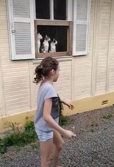 Funny Cute Cats, Cute Funny Animals, Funny Kittens, Adorable Kittens, Cute Wild Animals, Cute Little Animals, Cute Animal Videos, Cute Animal Pictures, Funny Animal Memes