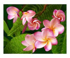 #beautiful #flowers #photography