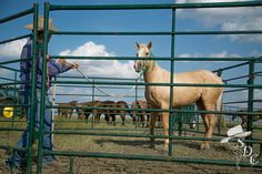 Ground work basics for your #horse.