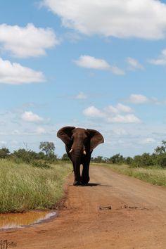 Krüger National Park - Elephant South Africa // Südafrika