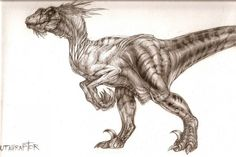 The size of Utahraptor ostrommaysorum - Dinosaurs Forum