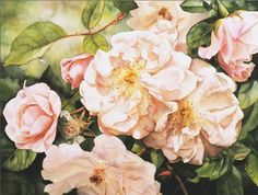 Watercolor and Oil Painting – Roses, Birds, Still lifes, Figurative ...Beautiful Shades of Pink