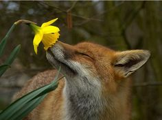 Even Wild Ones take time to smell the flowers <3