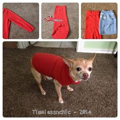 Thrift store men's cotton sweater sleeve - turned into dog sweater!
