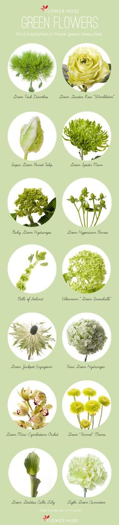 Our Favorite Green Flowers - Flower Muse Blog