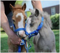 Magic and hamlet the two breyer ponies as babies (in real life) - Fohlen und Pferde - Tiny Horses, Cute Horses, Pretty Horses, Horse Love, Beautiful Horses, Animals Beautiful, Cute Funny Animals, Cute Baby Animals, Animals And Pets