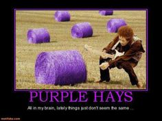 I'll never look at hay again the same way!  Thanks  ,