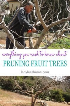 If you are growing fruit trees you must prune your fruit trees once a year. This is usually done during the winter and is a very important practice in fruit tree care. It will ensure that your fruit tree stays healthy and will produce a lot of fruit. Prune Fruit, Pruning Fruit Trees, Fruit Tree Garden, Tree Pruning, Tree Care, Pear Trees, Garden Care, Growing Tree, Apple Tree