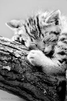 """You cannot look at a sleeping cat and be tense."" --Jane Pauley"