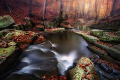 AUTUMN IN FOREST III by Lluis  de Haro Sanchez - Photo 127759657 - 500px