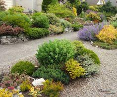 Декоративная крошка используется для создания переходов между растениями