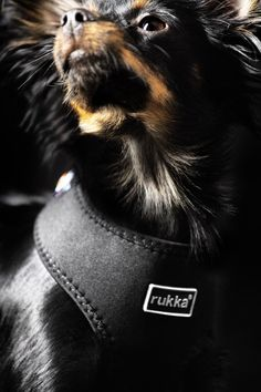 Rukka collars, leashes and harnesses Collar And Leash, Collars, Comfortable Fashion, Doggies, Spring Summer, Pets, Animals, Style, Little Puppies