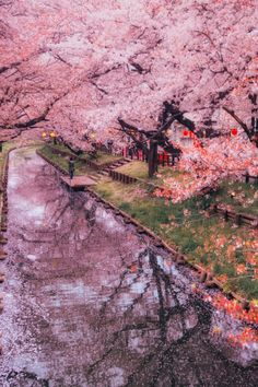 The Perfect World. Welcome O/ : Photo The Perfect World. Welcome O/ : Photo Beautiful Nature Wallpaper, Beautiful Landscapes, Landscape Photography, Nature Photography, Cherry Blossom Japan, Cherry Blossoms, Aesthetic Japan, Tree Wallpaper, Blossom Trees