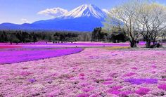 Hitsujiyama-Park,-Japan Travel in Technicolor: These are 14 of the world's most colorful places. Guiddoo