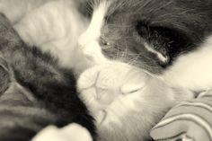 ®2017 Nickita Photography & Art Fotografía |Photography | Nickita Photography & Art Fotografía |Photography | [ Clotilde y sus bebes] FanPage https://www.facebook.com/NickitaPhotographyAndArt/ Fotografias https://www.facebook.com/pg/NickitaPhotographyAndArt/photos/?tab=album&album_id=796837600441032 #ph #photo #photography #instaphoto #canon #Cats #Gato #Madre #Mother #fotografia #argentina #remediosdeescalada #bsas #arte #instaart #picsart #artist #artofvisuals