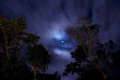 A Crescent Over the Jungle