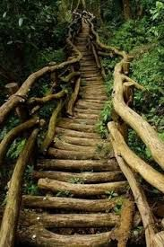 Forest staircase