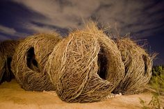 Patrick Dougherty Design and Sculpture using Natural Elements