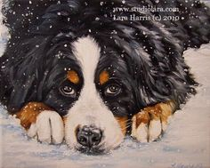 5x7 Winter Bernese Mountain Dog Fine Art Giclee by studiolara316