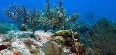 Plongée sous-marine en Floride | Les incontournables de Fort Lauderdale