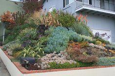 Ducote-Barnes Front Garden Slope | Front slope all grown in.… | Flickr