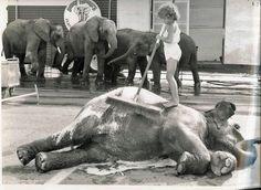 Bobby Moore Elephants #6
