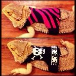 Custom made Bearded dragon harnesses the tuxedo one for frankie and the a dress for betty