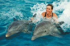 Resultados de la Búsqueda de imágenes de Google de http://1.bp.blogspot.com/-SaasCZuVLM8/TWcMrMidNMI/AAAAAAAAA5E/m7w-yAdCVY8/s1600/dolphins.jpg