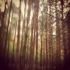 Forest in Poznań, Poland