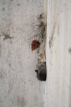 https://www.flickr.com/photos/andrearuwett/shares/U6y8L0 | Foto di Andrea Ruwett