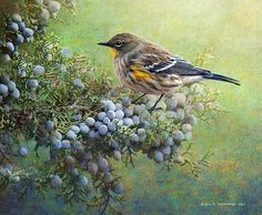 """""""Autumn Juniper Berries And Yellow Rumped Warbler"""" by R christopher Vest on fineartamerica.com"""