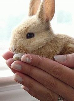 """""""Just hold me"""" bunny . Animals And Pets, Baby Animals, Funny Animals, Cute Animals, Rabbit Life, Pet Rabbit, Baby Bunnies, Cute Bunny, Adorable Bunnies"""