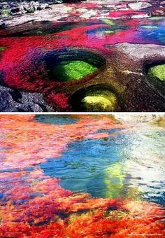 This is the Caño Cristales. For a brief period each year, this unique Colombian river blooms in a dazzling multi-colored display.During a brief span between the wet and dry seasons, when the water level is just right, the many varieties of algae and moss bloom in a dazzling display of colors. Blotches of amarillo, blue, green, black, and red—and a thousand shades in between—coat the river.