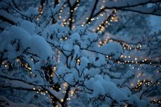 One of my favorite sites at Christmas time - lights covered with snow.