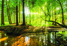 Bring an epic forest scene into your home with our striking green trees wall mural. The stunning tree wallpaper features an image captured deep in the woods, with a small stream in the foreground and trees stretching out above. Tree Wallpaper, Wallpaper Panels, Photo Wallpaper, Adhesive Wallpaper, Canvas Pictures, Print Pictures, Tree Wall Murals, Tree Forest, Green Trees