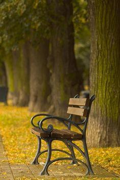 Bench | Malinconia Leggera