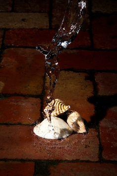 도시에서도 조개들은 물과 같이 있고 싶어요