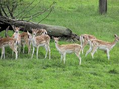 Bibhutibhushan Wildlife Sanctuary - in West Bengal, India