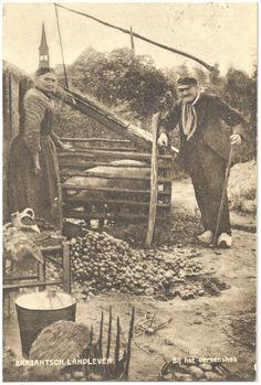 Het houden van het varken in het varkenshok op het erf - 1900-1920 Zuid-Oost Brabant #NoordBrabant